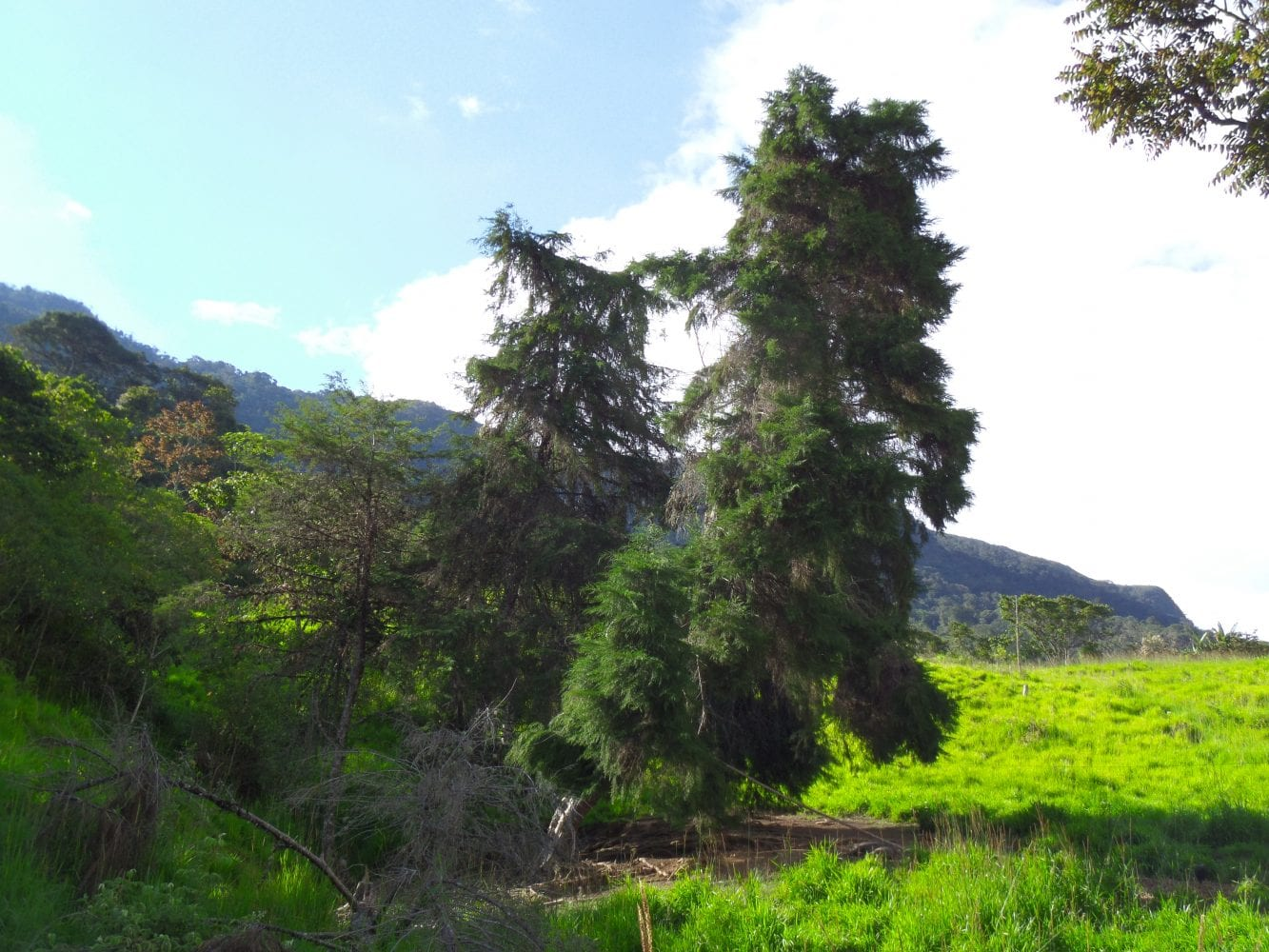 Cypress trees abound providing the farm with it's name