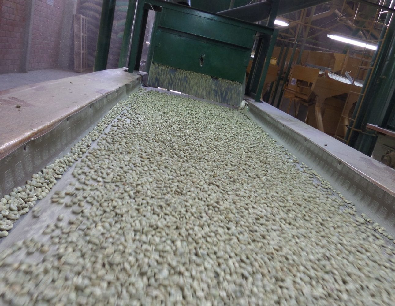 Green coffee being processed at the dry-mill in Puira
