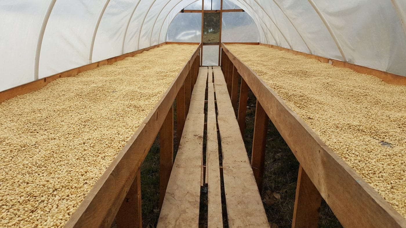 Parchment drying in a solar dryer on raised beds